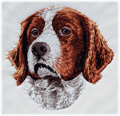 Irish Red/White Setter